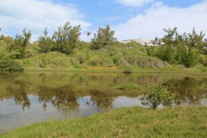 Spittal Pond Bermuda